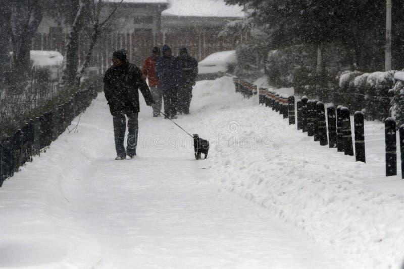 Chien de marche en hiver photos stock