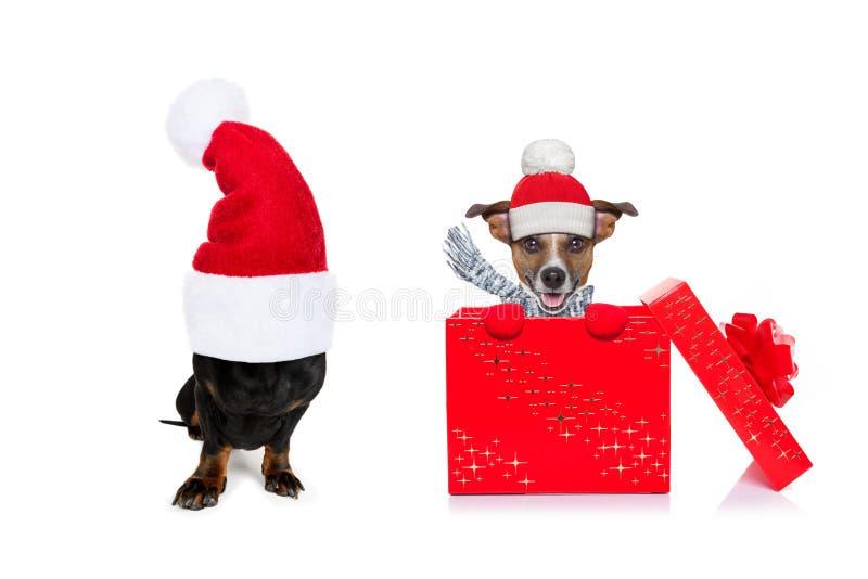 Chien de Noël santa claus image stock