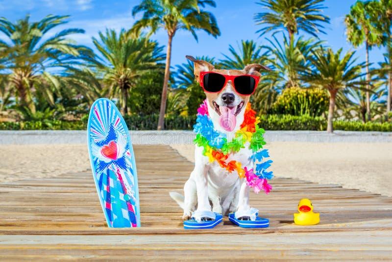 Chien de paradis de vacances d'été photos libres de droits