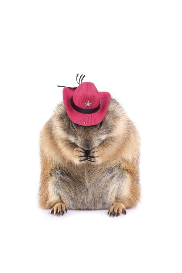 Chien de prairie mignon utilisant le chapeau de cowboy rose images stock
