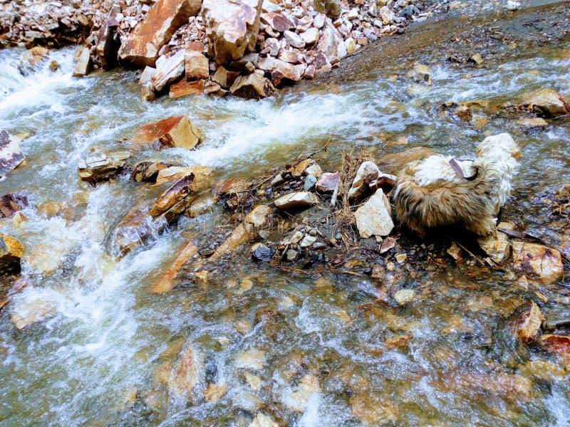 Chien de rivière photographie stock libre de droits