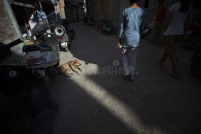 Chien de rue dans l'axe de la lumière photos libres de droits