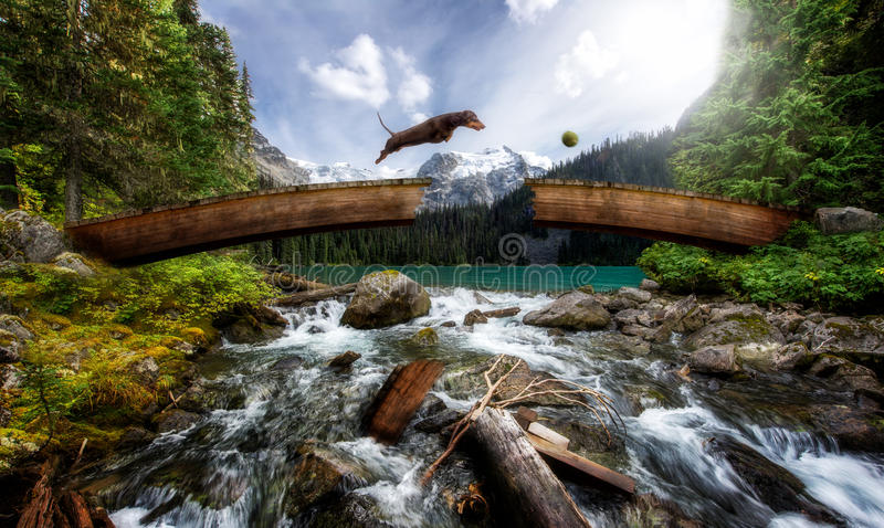 Chien de saucisse sautant par-dessus le pont cassé au-dessus d'un courant photos stock