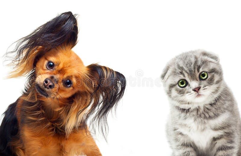 Chien de terrier de jouet et un chat photo libre de droits