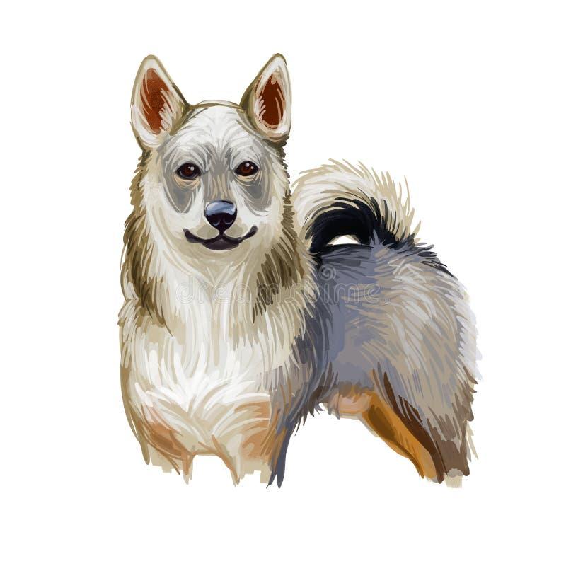 Chien de vache suédois Vallhund, race de chien originaire de Suède Illustration d'art numérique Sculpture isolée du portrait de l illustration de vecteur