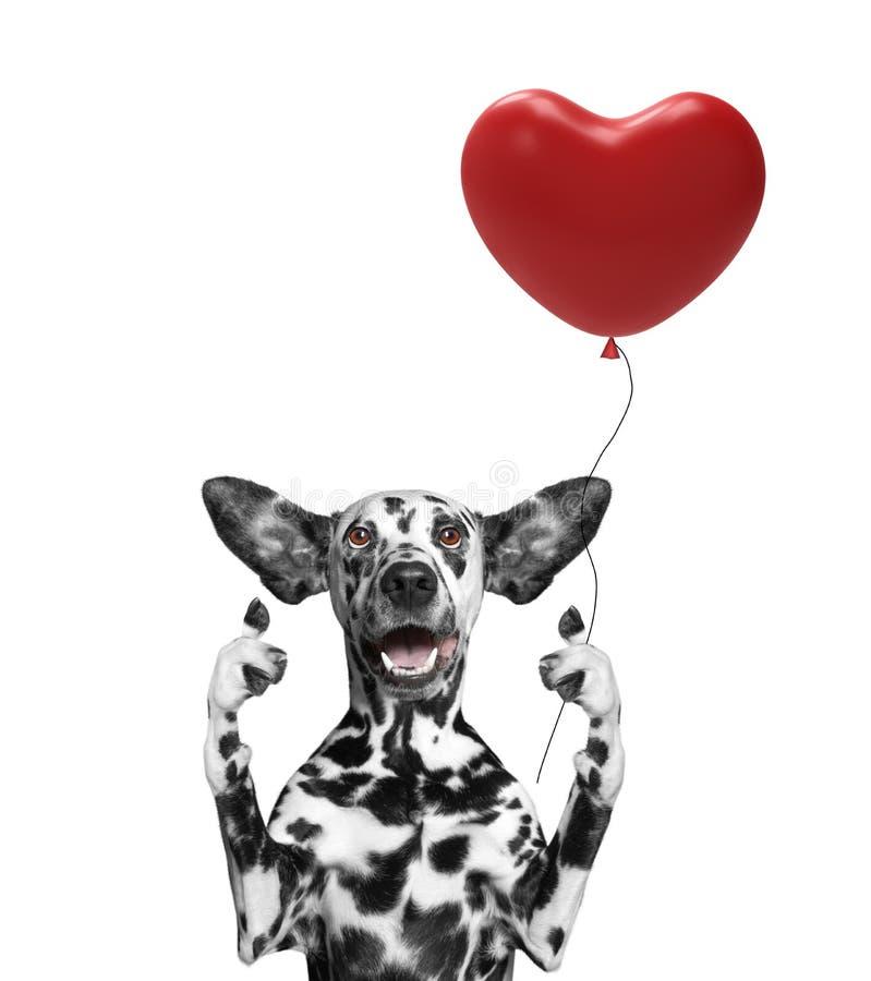 Chien de Valentine tenant le baloon de coeur photographie stock