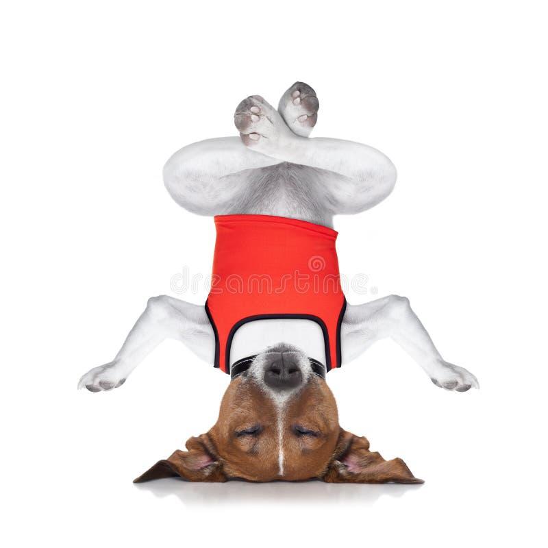 Chien de yoga photographie stock