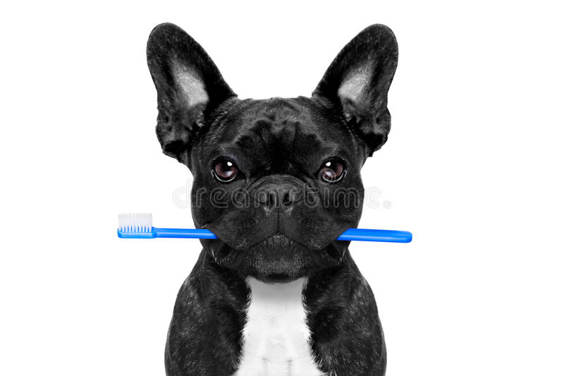 Chien dentaire de brosse à dents image stock