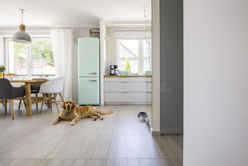 Chien devant le réfrigérateur en bon état dans l'intérieur spacieux avec la cuisine photographie stock libre de droits