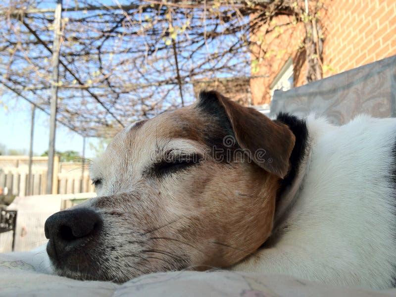 Chien dormant dehors pendant le BBQ image libre de droits