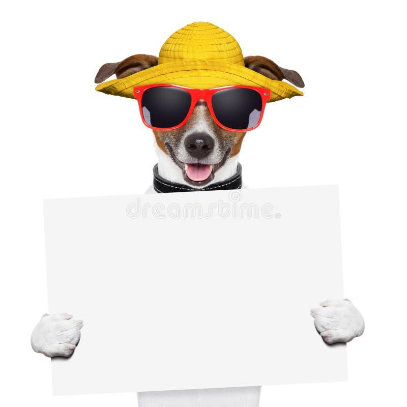 Bannière de chien d'été photo stock