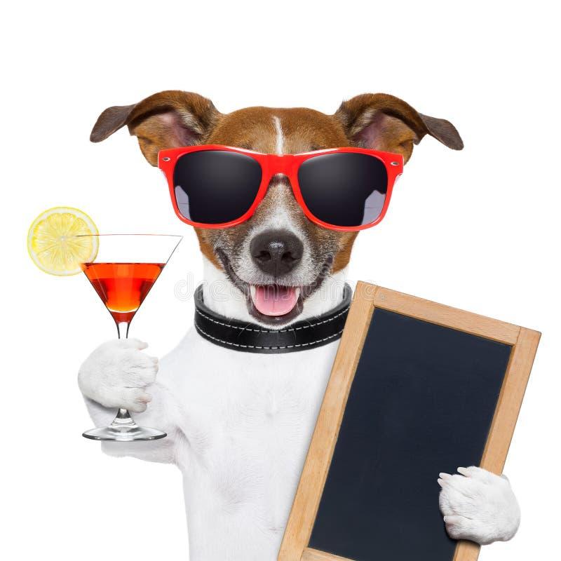 Chien drôle de cocktail photographie stock libre de droits