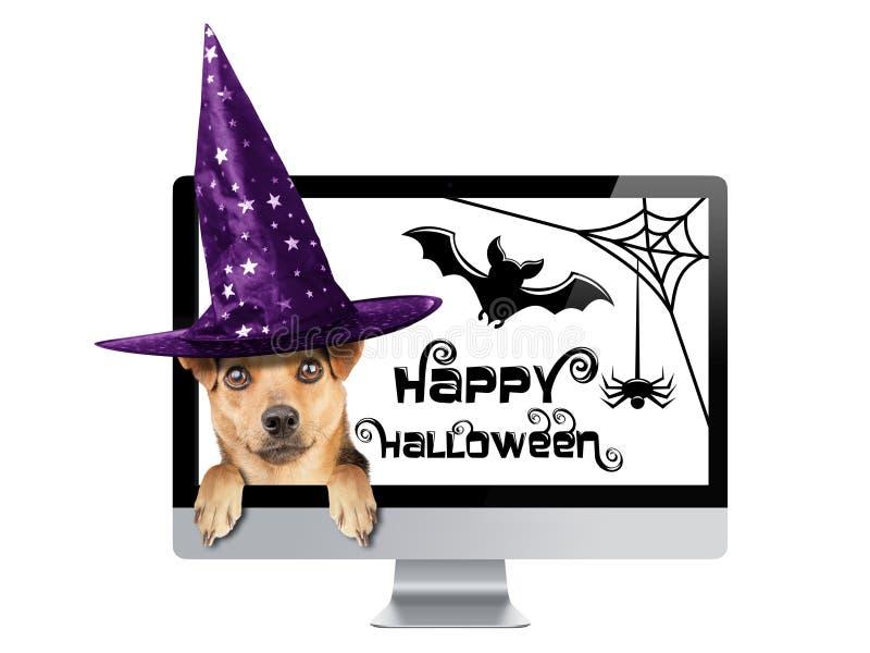 Chien drôle de Halloween piaulant à l'intérieur du chapeau de sorcière de PC de moniteur d'isolement images libres de droits