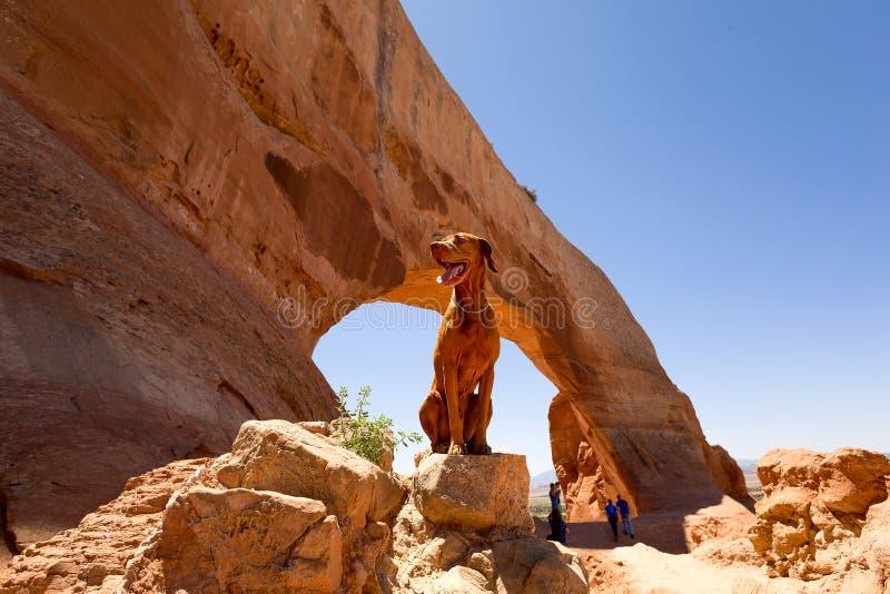 Chien en tant que touriste photos libres de droits