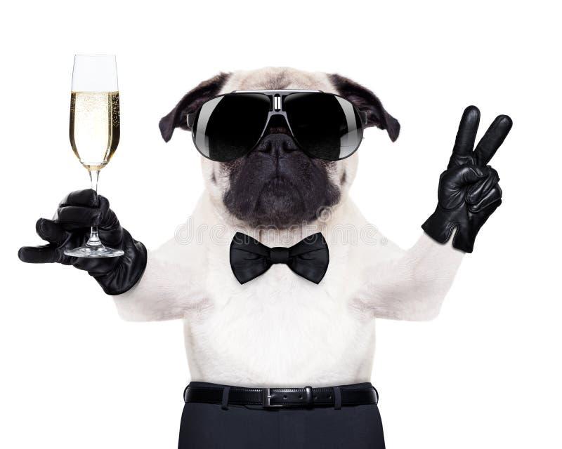 Chien en verre de Champagne photographie stock libre de droits