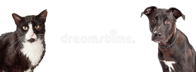 Chien et Cat Website Banner noirs et blancs photo libre de droits
