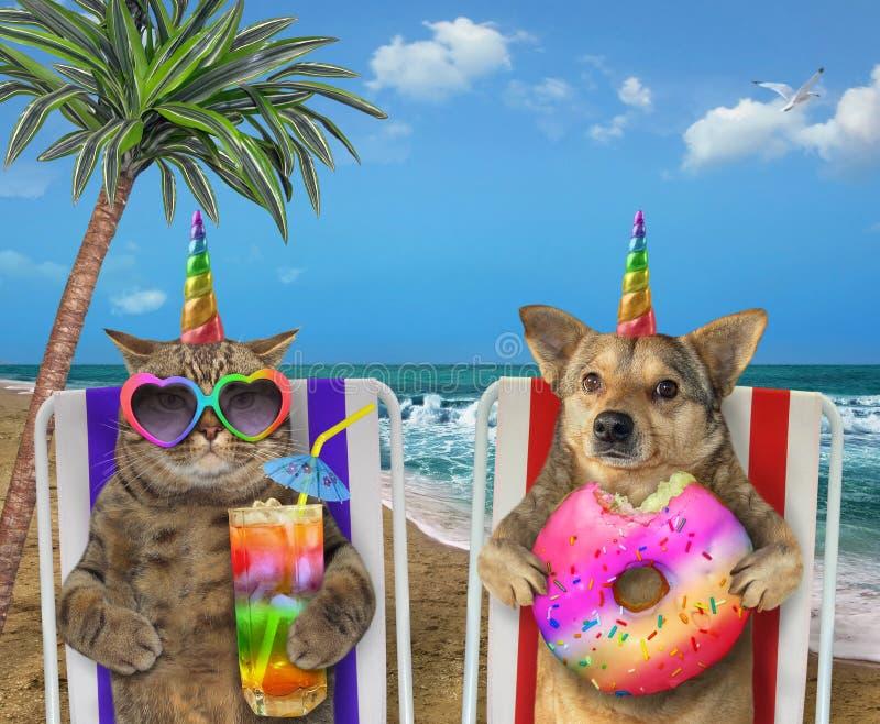 Chien et chat se reposant sur la plage photo stock