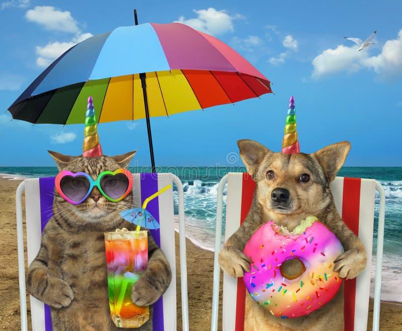 Chien et chat se reposant sur la plage image stock
