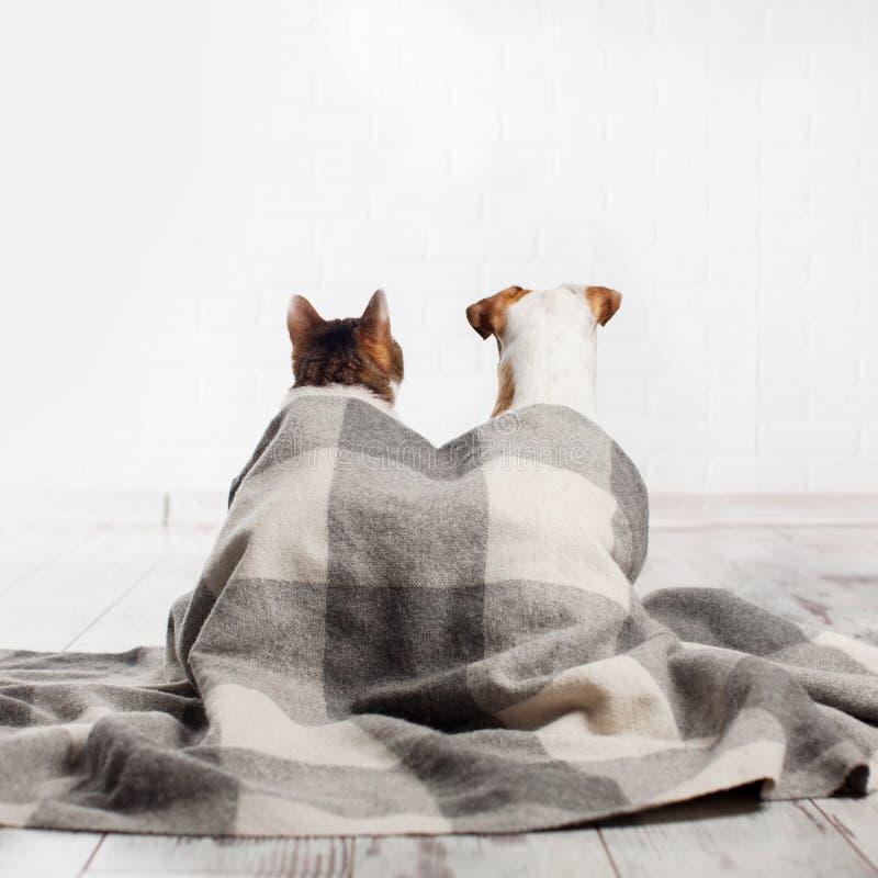 Chien et chat sous un plaid photo stock