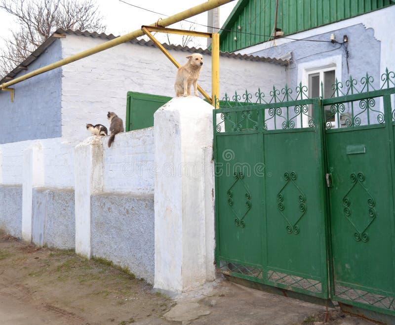 Chien et chat sur la barrière photographie stock