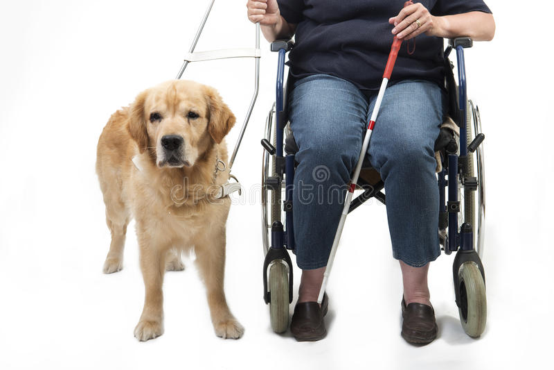 Chien et fauteuil roulant de guide d'isolement sur le blanc photographie stock