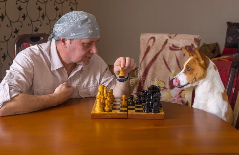 Chien et homme mûr jouant des échecs dans un tournoi de famille image stock