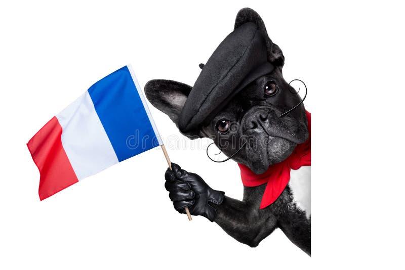 Chien français images stock