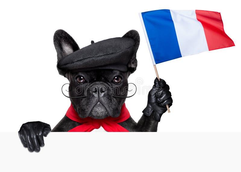 Chien français photos libres de droits