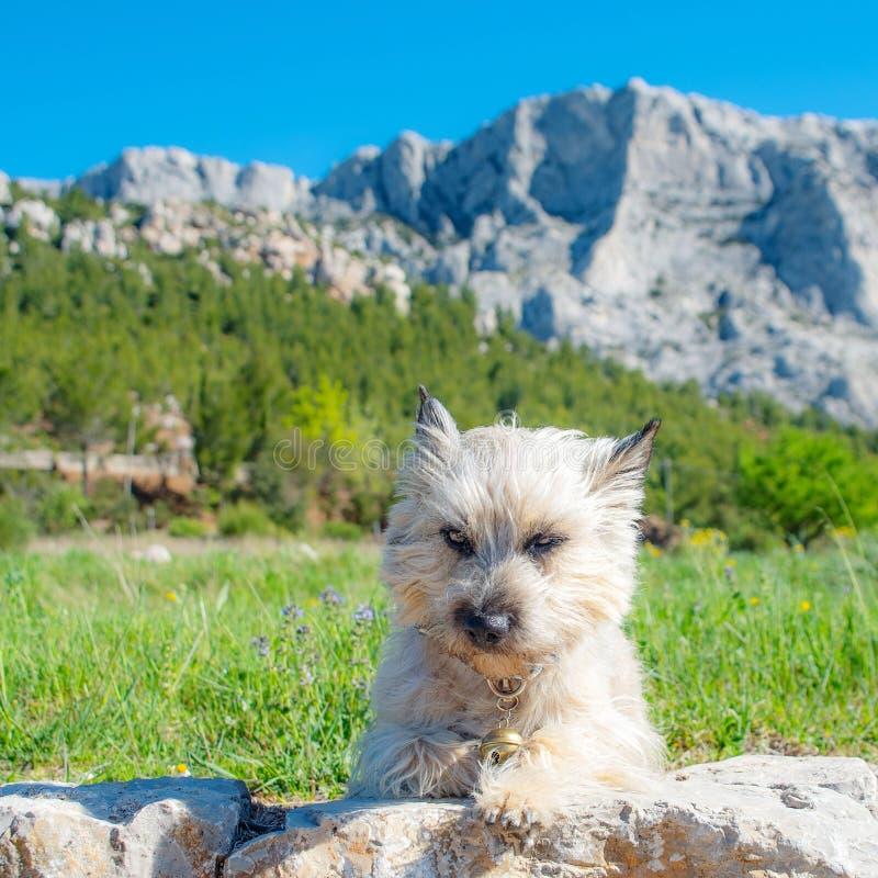 chien grincheux devant une montagne photo libre de droits