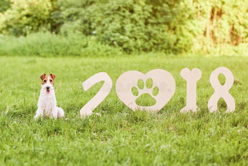 Chien heureux adorable de terrier de renard au greetin de nouvelle année du parc 2018 photographie stock libre de droits