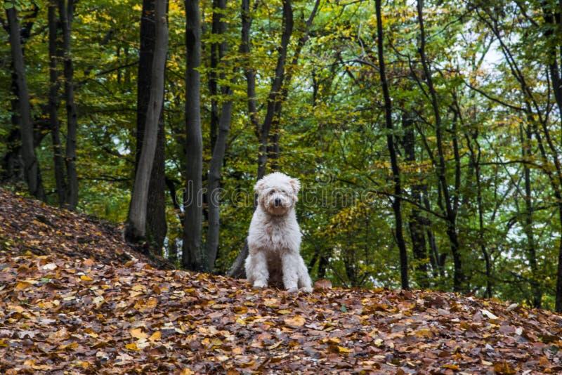 Chien heureux dans la forêt photos stock