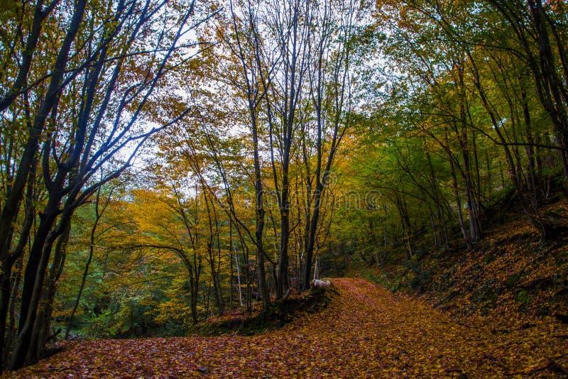 Chien heureux dans la forêt image stock