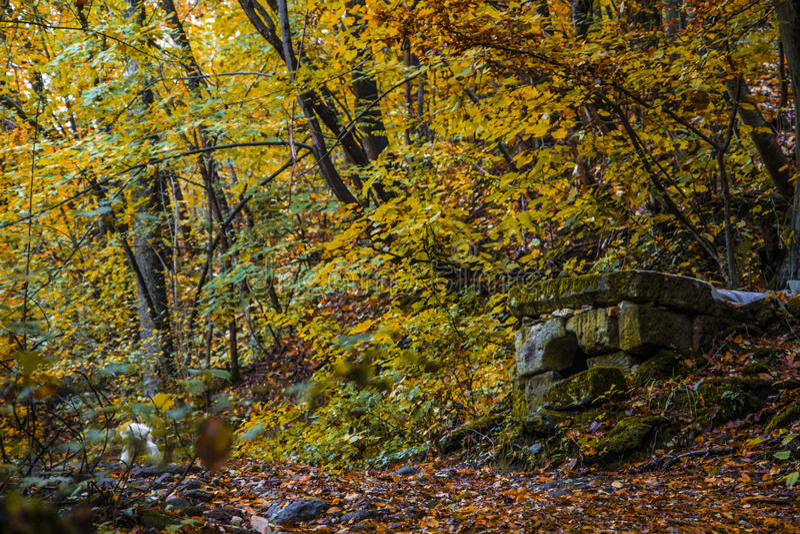 Chien heureux dans la forêt images stock