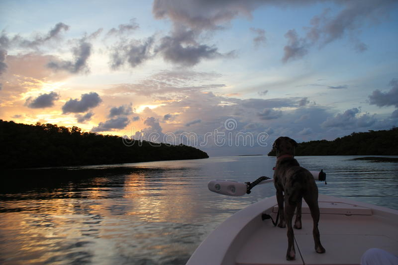 Chien heureux sur un bateau au coucher du soleil dans Islamorada dans les clés de la Floride image libre de droits