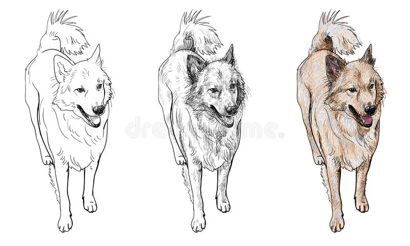 Chien hybride illustration stock