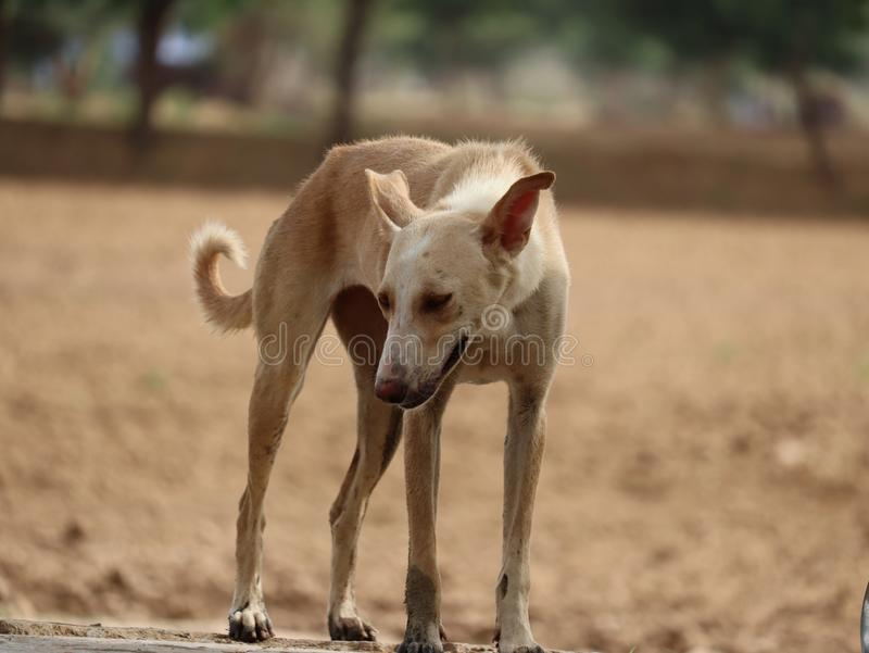 chien | image de chien de penseur image libre de droits