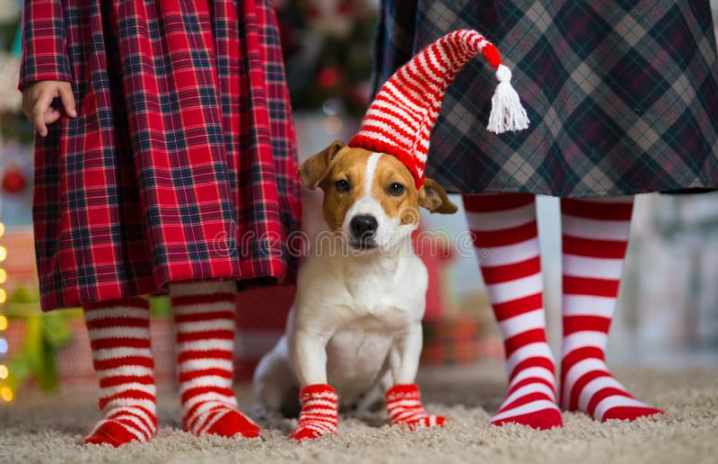 Chien Jack Russell Terrier et femme de jambes et petite fille en rouge images stock