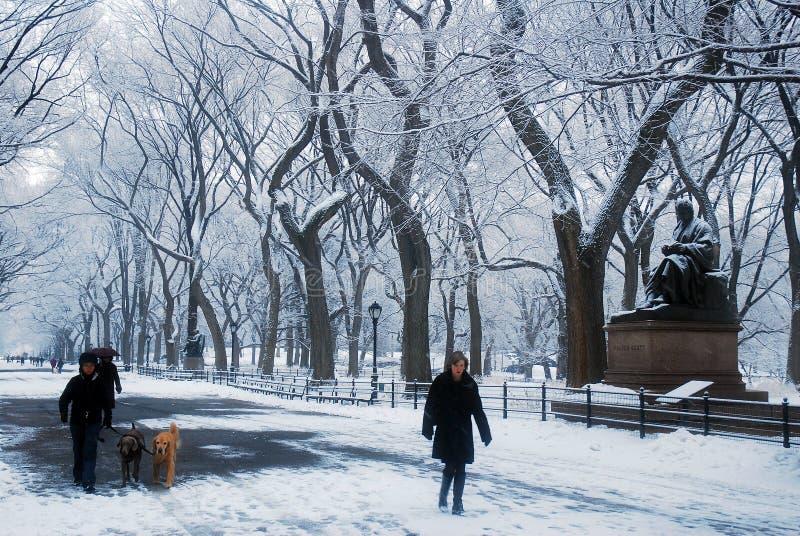 Chien marchant pendant l'hiver image stock