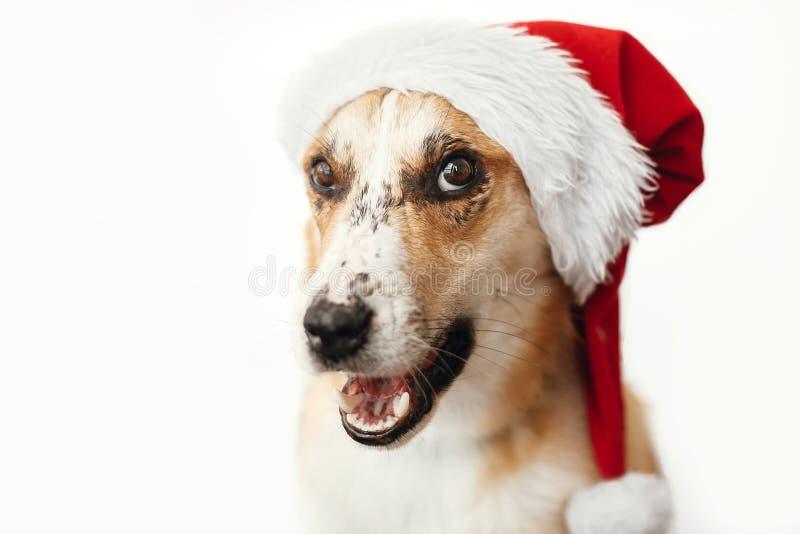 Chien mignon dans le chapeau de Santa avec les yeux adorables et le sitt drôle d'émotions image stock