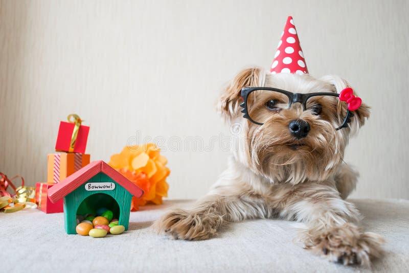 Chien mignon drôle de Yorkshire Terrier (Yorkie) en verres de carnaval photographie stock