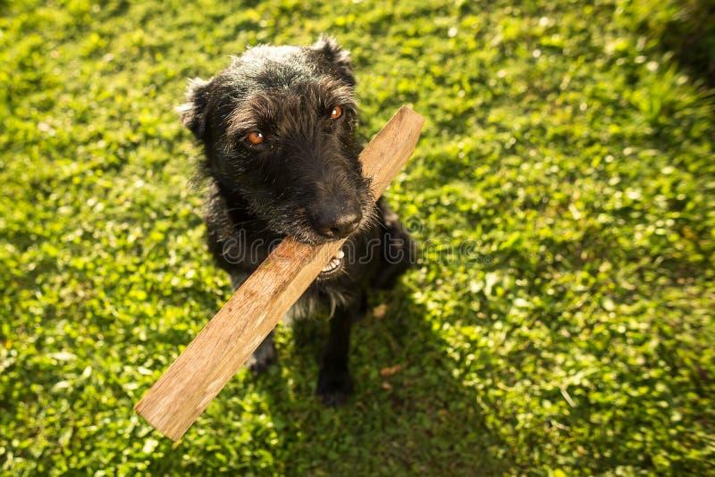 Chien mignon jouant avec un morceau de bois photographie stock