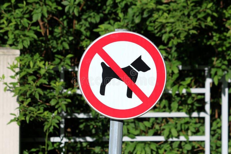 Chien n'a pas permis le signe rond blanc en m?tal avec l'image noire du chien crois?e avec la ligne rouge mont?e sur le poteau en images stock