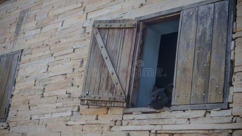 Chien noir regardant par la fenêtre d'une maison rustique photos libres de droits