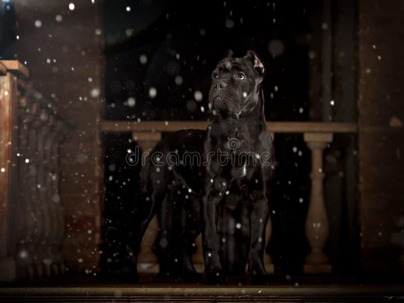 Chien noir sur le porche la nuit images stock