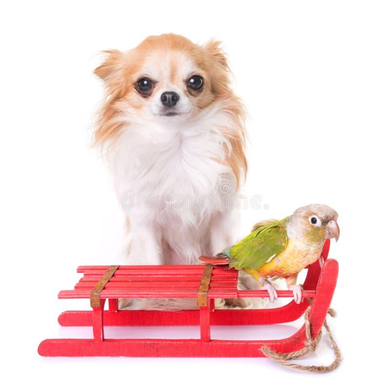 Chien, oiseau et Noël photo stock