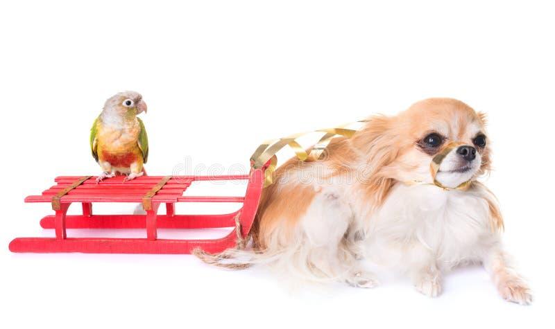 Chien, oiseau et Noël images libres de droits