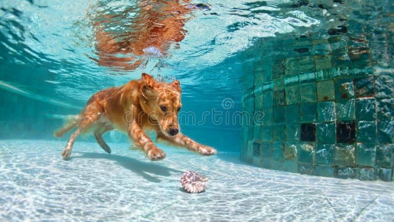 Chien plongeant sous l'eau dans la piscine photo libre de droits