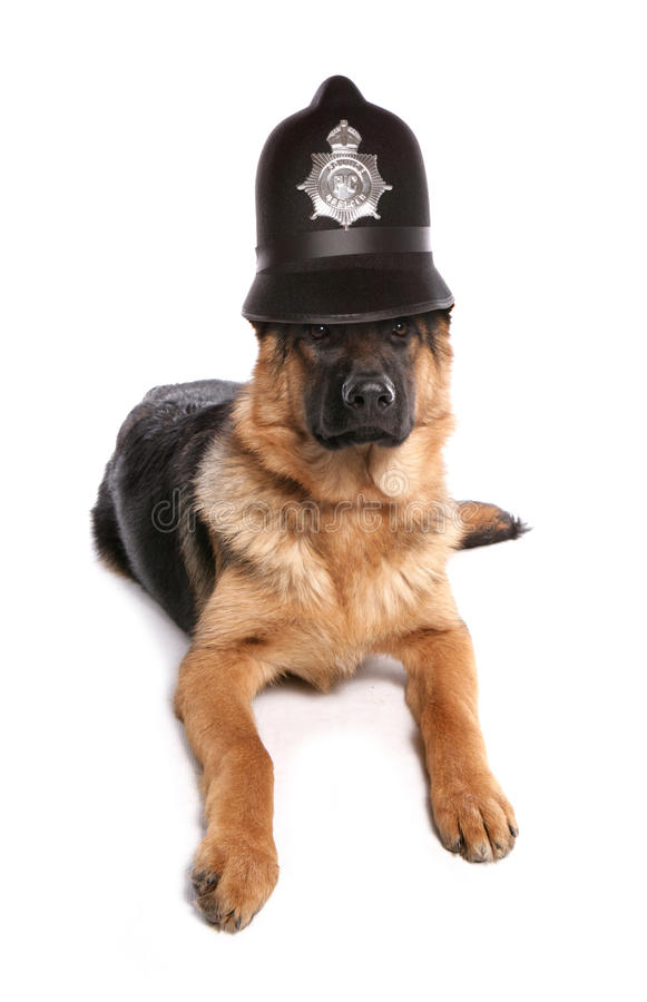 Chien policier images stock