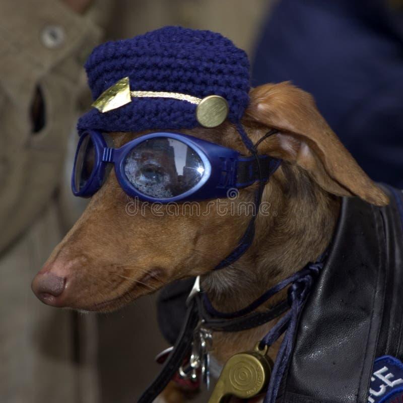 Download Chien policier image stock. Image du dachshund, carnaval - 91269