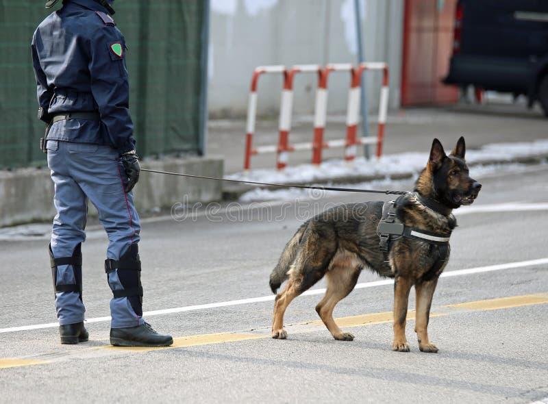 chien policier de la police italienne dans la ville photos libres de droits